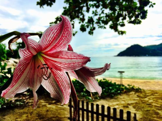 Thongtapan Resort: Traumhaft gelegen - Bungalows mitten im Wald, sehr schöner Strand, netter und freundlicher Servi