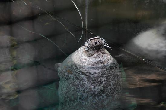 la foca giocherellona - foto di acquario di genova, genova