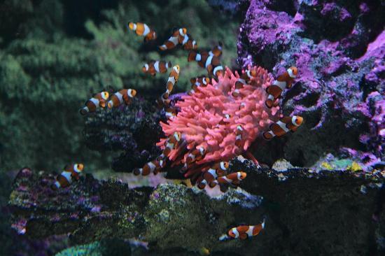 meravigliose creature - foto di acquario di genova, genova