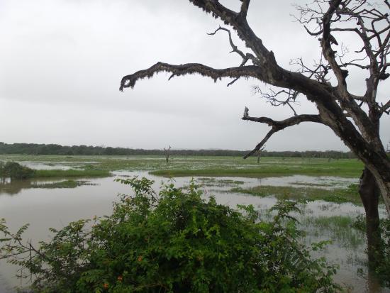yala forest  Picture of Yala National Park Tissamaharama