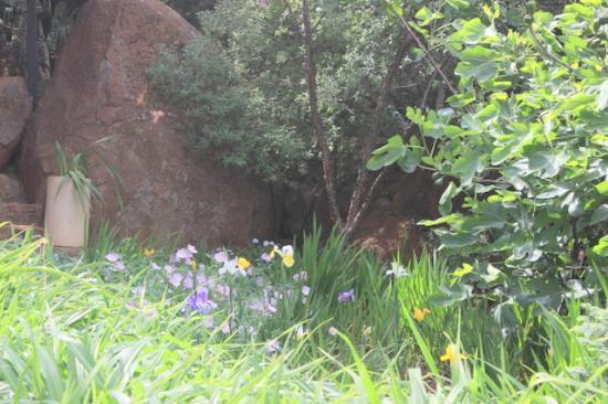 Glenvista Guest House: Garden