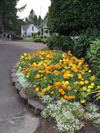 Cascade Locks, OR: Lovely flowers by the path
