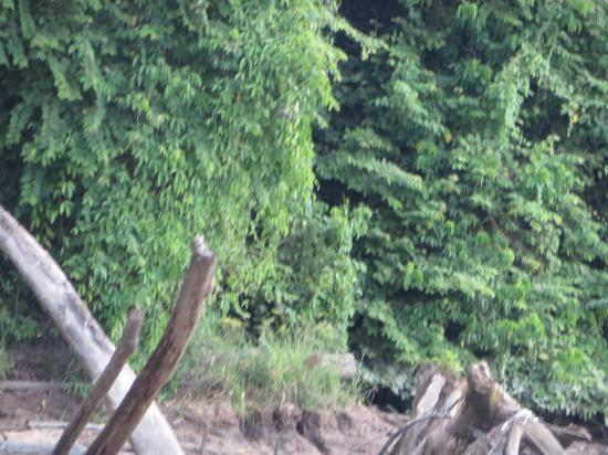 Sabah: Magiche escursioni sul kinabatangan