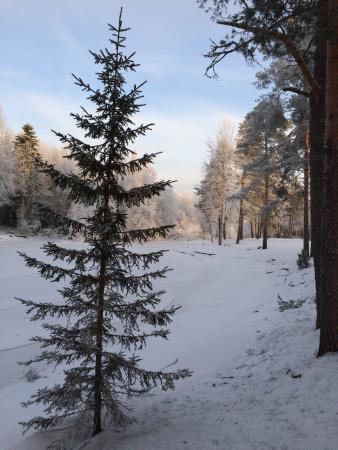 Runni, Suomi: Вид на реку за отелем