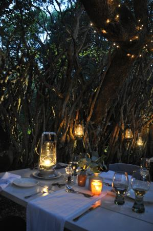 Grootbos Private Nature Reserve, جنوب أفريقيا: Woodland Dining
