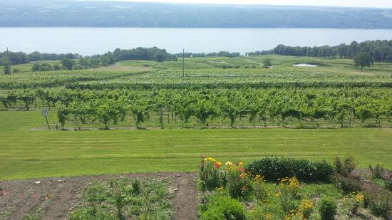 Burdett, Nova York: View of Seneca Lake from Damiani