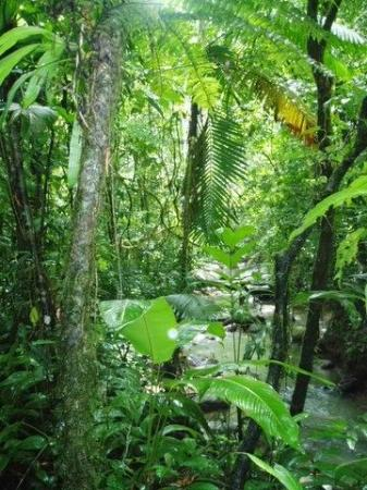 Nuevo Arenal, Costa Rica: Forest/River on Chalet Nicholas property for guests