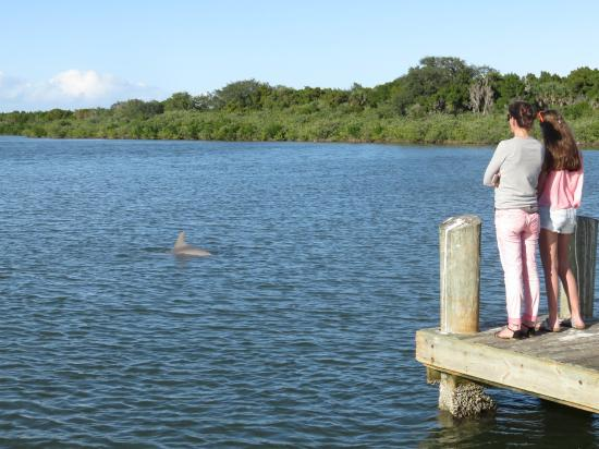 Oak Hill, FL: Delfine zum Greifen nah