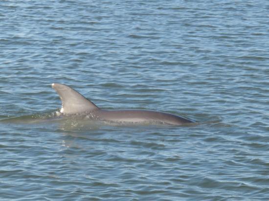 Oak Hill, FL: Delfin