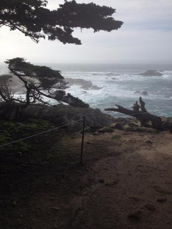 Cypress grove at Point Lobos.