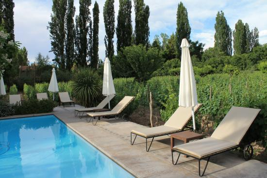 Finca Adalgisa Wine Hotel, Vineyard & Winery: Pool and vineyard