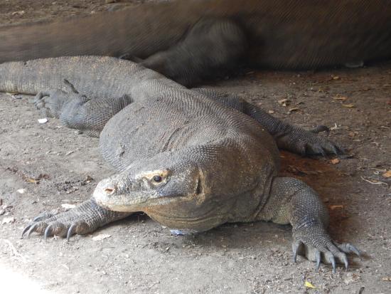 Loh Liang National Park: Dragon