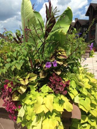 Hamburg, NJ: Gorgeous Planter on the Terrace