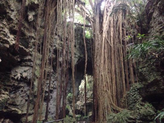 Valley of Gangala Photo