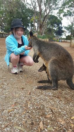Cowes, Australia: 20160123_102817_large.jpg