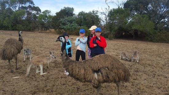 Cowes, Australia: 20160123_105701_large.jpg