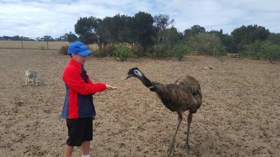 Cowes, Australia: 20160123_110447_large.jpg