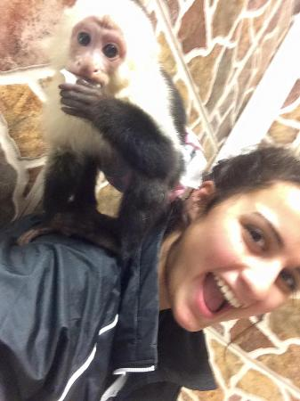 Zoological Wildlife Foundation: The monkeys are very playful and curious.