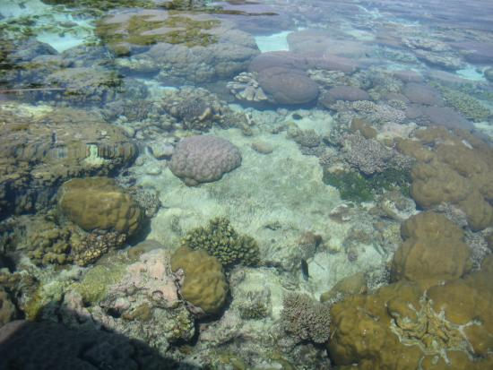 Gizo, Kepulauan Solomon: Coral out from restaurant and to the left!