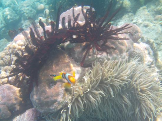 Gizo, Kepulauan Solomon: Coral off Fatbuys