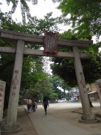 Komagome Fuji Shrine: 立派な鳥居