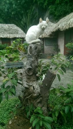 Vu Binh Stilthouse Cat ba