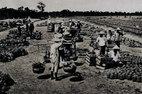 駁二藝術特區: 早期高雄港的駁二倉庫儲存輸出台灣的鳳梨。