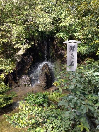 Kinkakuji Temple: 鯉魚石