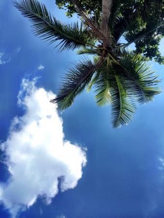 The Andaman Sunflower Resort & Spa 사진
