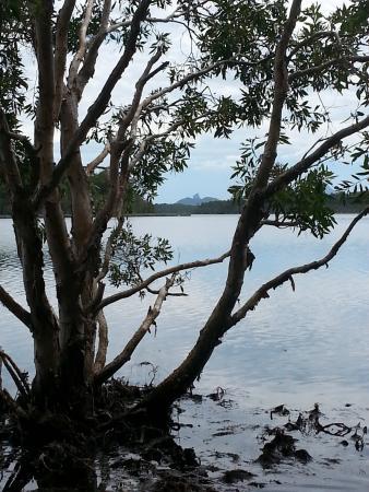 Mooloolah Valley, Australia: Mountain View while walking around dam