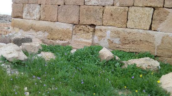 Dimona, Israel: 20160123_113403_large.jpg
