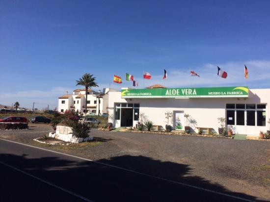 Museo de Aloe Vera