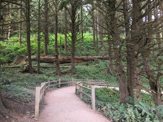 Florence, OR: Part of the hiking trail