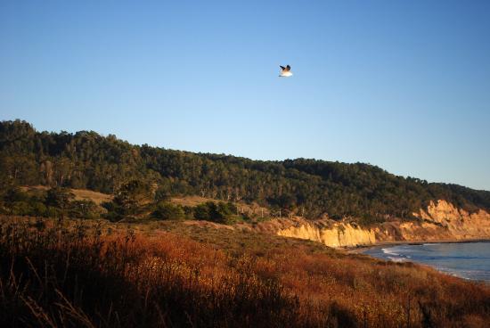 Pescadero-billede