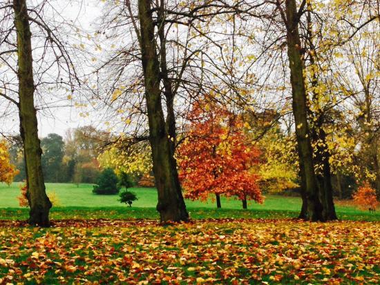 Barnet, UK: Arboretum taken during a visit in Autumn