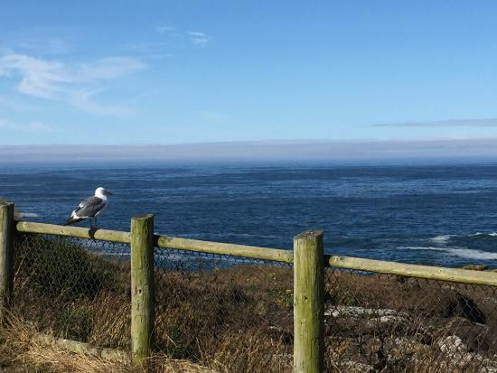 Depoe Bay, OR: Even the bird enjoys the view