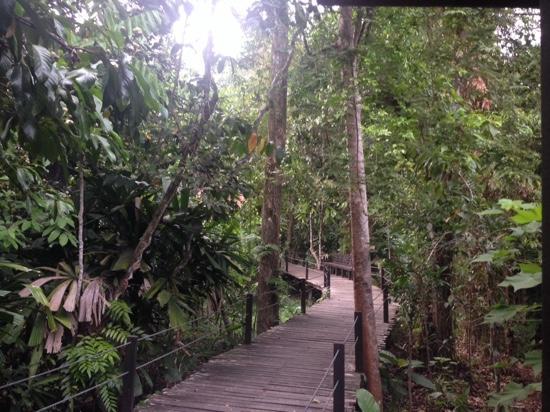 Kinabatangan District, Maleisië: boardwalk linking chalets