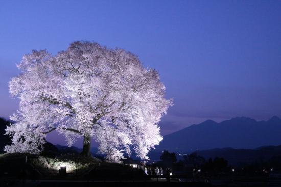 Nirasaki, Japão: わに塚の桜