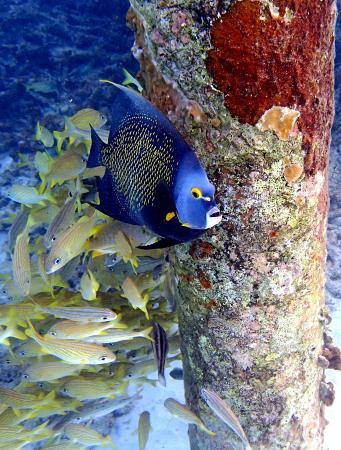 Bonaire Exclusive Bungalows Foto