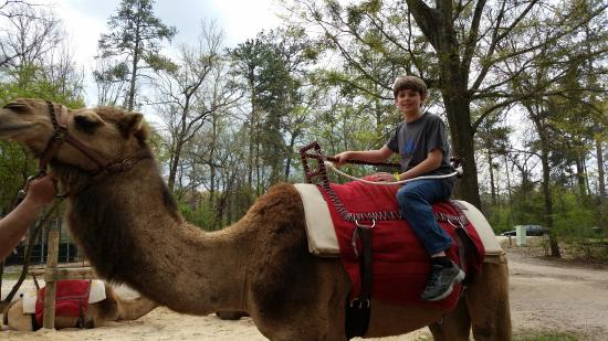Birmingham Zoo: Hump Day is not only for work!