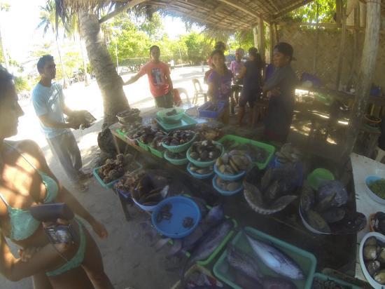 Mindoro, Filipinas: Banco di pesce in spiaggia