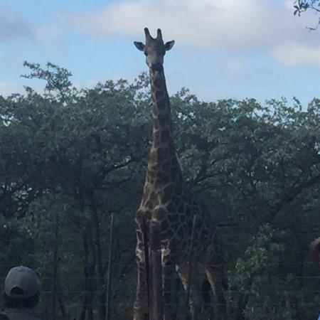 Ngama Tented Safari Lodge Photo