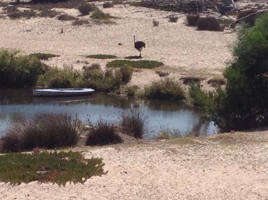Buffelsfontein: View from chalet 1
