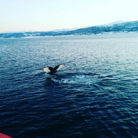 Polar Charter: best views and best whales watching experience!