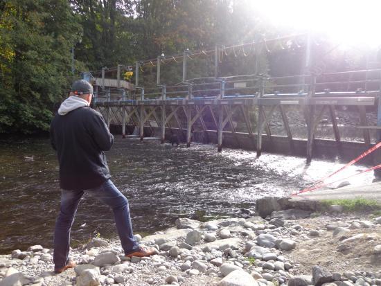 Campbell River, Canada: En ze waren heel dichtbij...