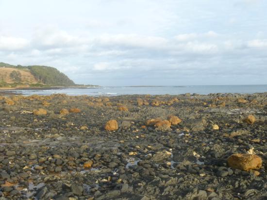 Penguin, Austrália: rocky shore on left