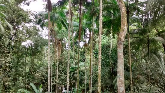 Poco Do Tarzan