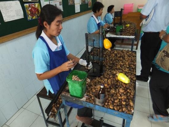 Rayaburi Hotel Patong: Cashew nut processing.