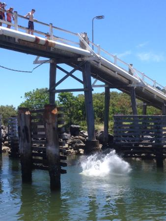 Active Holidays South West Rocks: jumping off the bridge