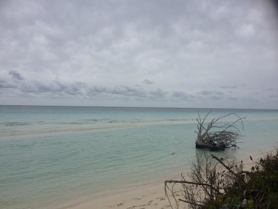Beach - Viva Wyndham Fortuna Beach - An All-Inclusive Resort Photo